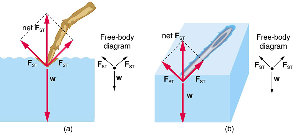 College Physics Cohesion And Adhesion In Liquids Surface