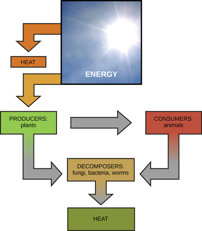 Energy and Metabolism - VOER