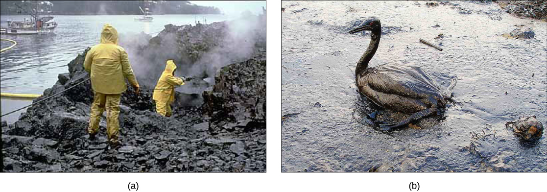 Image Result For Genetically Engineered Bacteria Cleaning Up Oil Spills