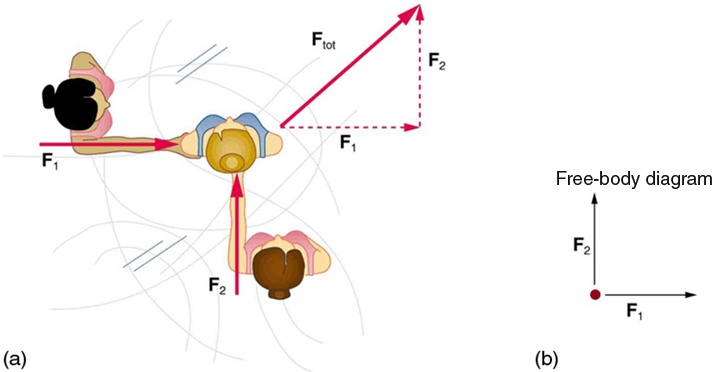 College Physics Friction Voer