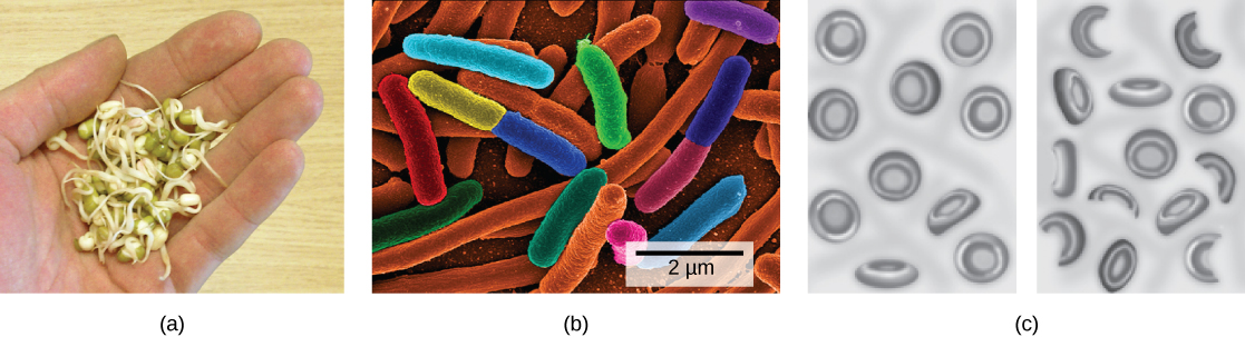 e coli a food borne disease biology essay The main causes of food borne illness are bacteria which constitutes 66% of the   poisoning of food by salmonella ordinary farms by instituting bio-security and.